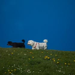 Ik wou dat ik twee hondjes was.....