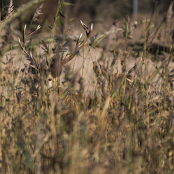 Camouflage Hert