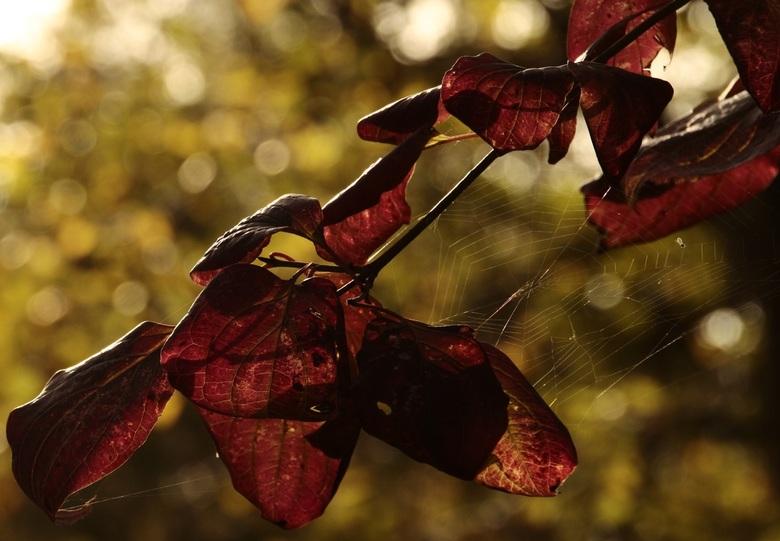 Mooi rood -