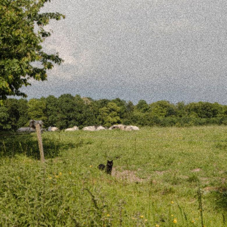 Platteland  -