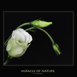 Miracle Of Nature..