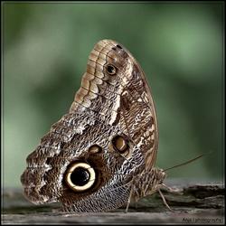 Vlinders gespot 2