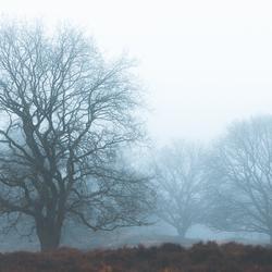 Groots in de mist