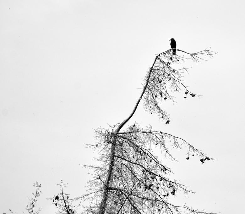 Alone. - Soms zie ik zwart/wit.