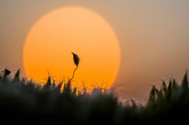 mos tegen de zon - Eenzaam mosje tegen de ondergaande zon. Macro 35mm