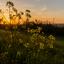 Sunrise Almere Buiten