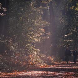 Herfst- Dunoplateau - Italiaanseweg.2