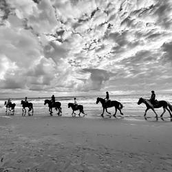 Horses @ the beach