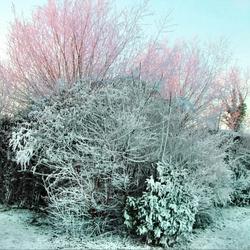 Winterbomen2
