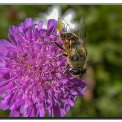 van de bloemtjes en de bijtjes 2.jpg