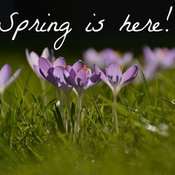 Spring is (finaly) here!