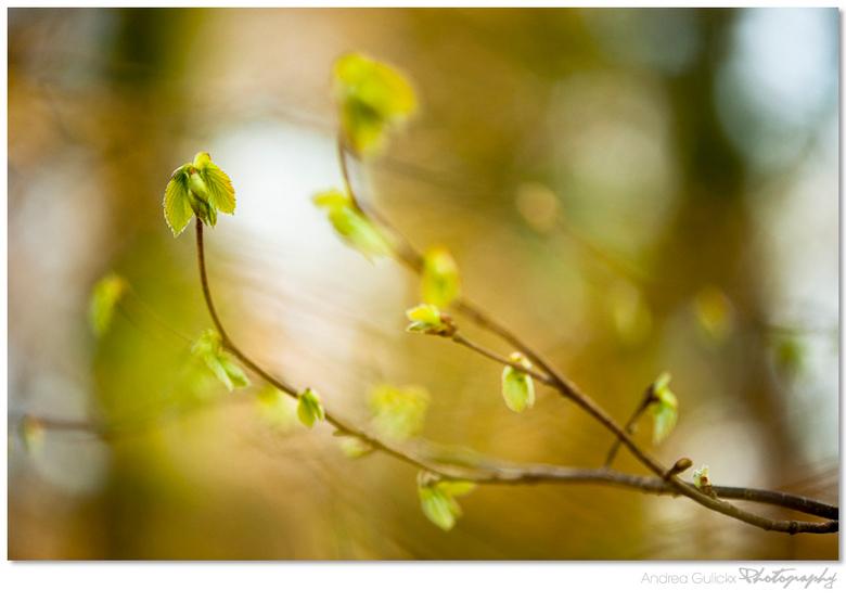 Spring Awakenings - Wat is het toch genieten nu het zonnetje schijnt en alles ontwaakt. Amelisweerd. Prachtig te zien hoe het prille groen ontluikt aa