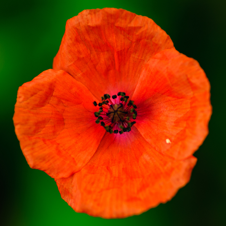 Oranje bloem - Geen idee wat het is, vond hem wel mooi.