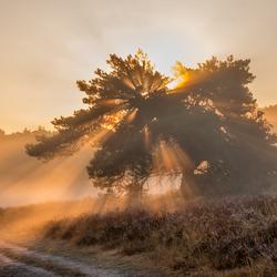 Brunssummerheide zonneharpen