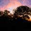 Zonsondergang Krugerpark .