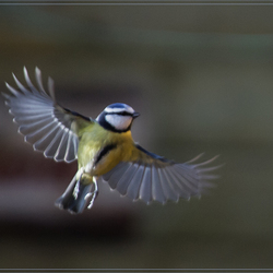 Spread your wings......