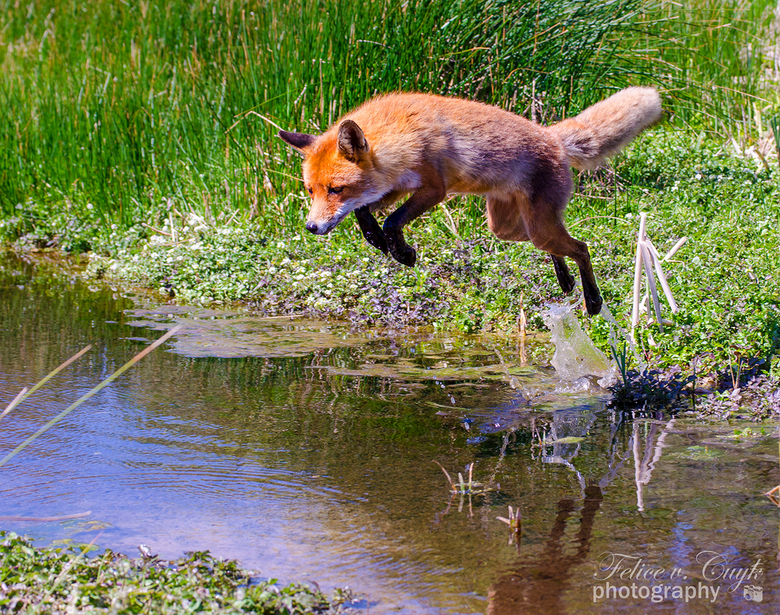 The quick brown fox jumps over... - the ditch