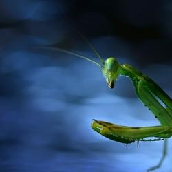 Mooi groen