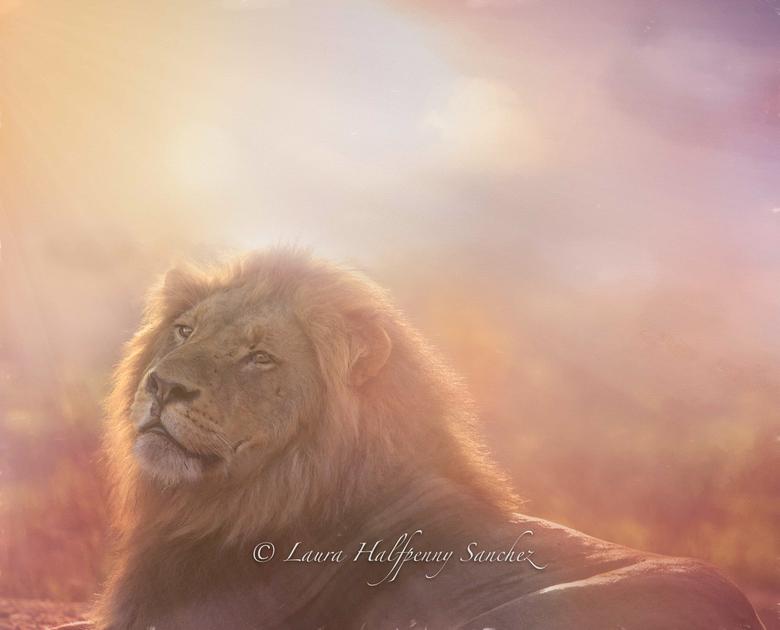 Leeuw bij zonsopkomst