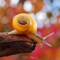 Slakje in herfstsfeer