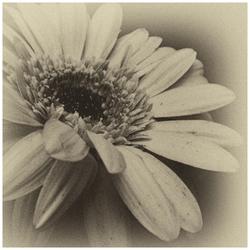 Flowers in Monochrome -2-