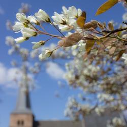 Blossom church