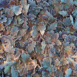 Bevroren herfstbladeren