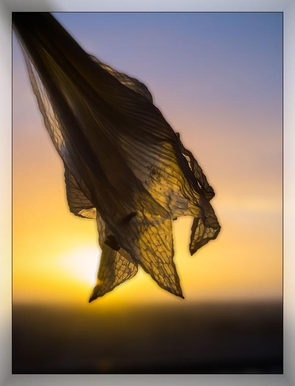 2018-01-22 zonsondergang door amaryllis - verkleind - 010 - Ach vanavond de zonsondergang door de ogen van een vergane amaryllis is toch weer eens eve