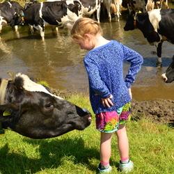 De koe en het meisje