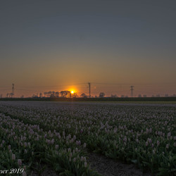 Zonsopkomst tulpenveld Schagen
