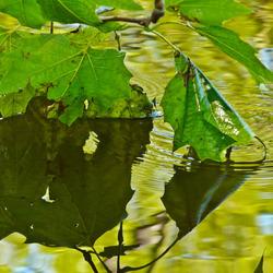 waterspiegeling groen 2