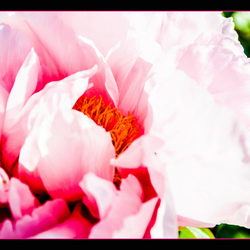 bloem in fel licht