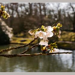 Lente in de Japanse tuin 11