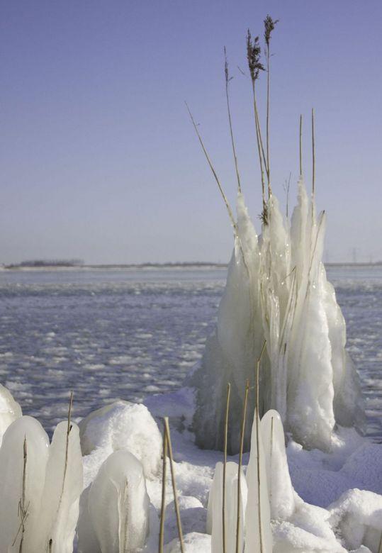 ijzig riet - De vorst en de wind zorgen voor schitterende taferelen.