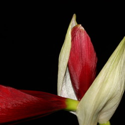 Vol in bloei