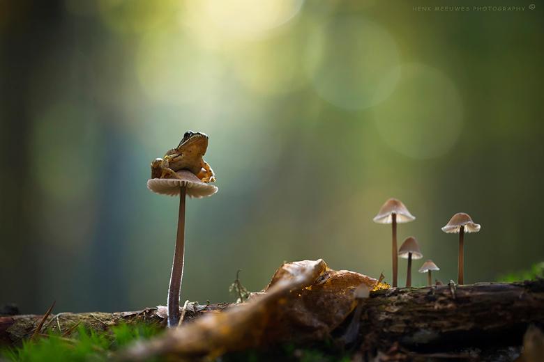 Toezichthouder paddenstoelzoomdag 2016