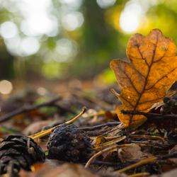 Herfstpalet.