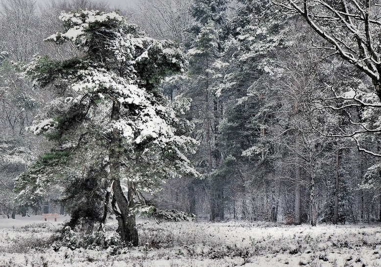 Winters bos -