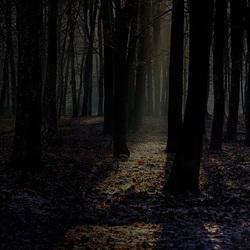 magisch bos 2