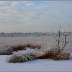 Winterwonderland IV