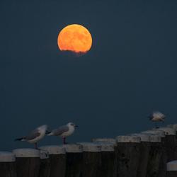 Opkomende volle maan