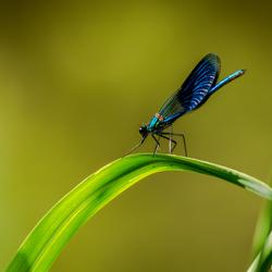 Libelle aan de waterkant - paradijsbos Barneveld