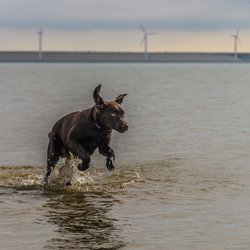 Pup in het water