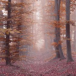 Dutch Misty forests - Part I