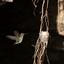 Aanvliegende Kolibrie
