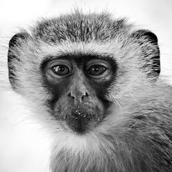 A Monkeys Look