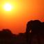 Olifant bij ondergaande zon