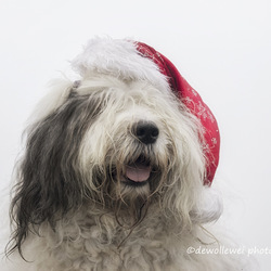 Scarlett's Christmas portrait