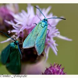 metaal vlinder