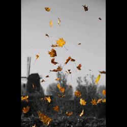 Herfst Heusden